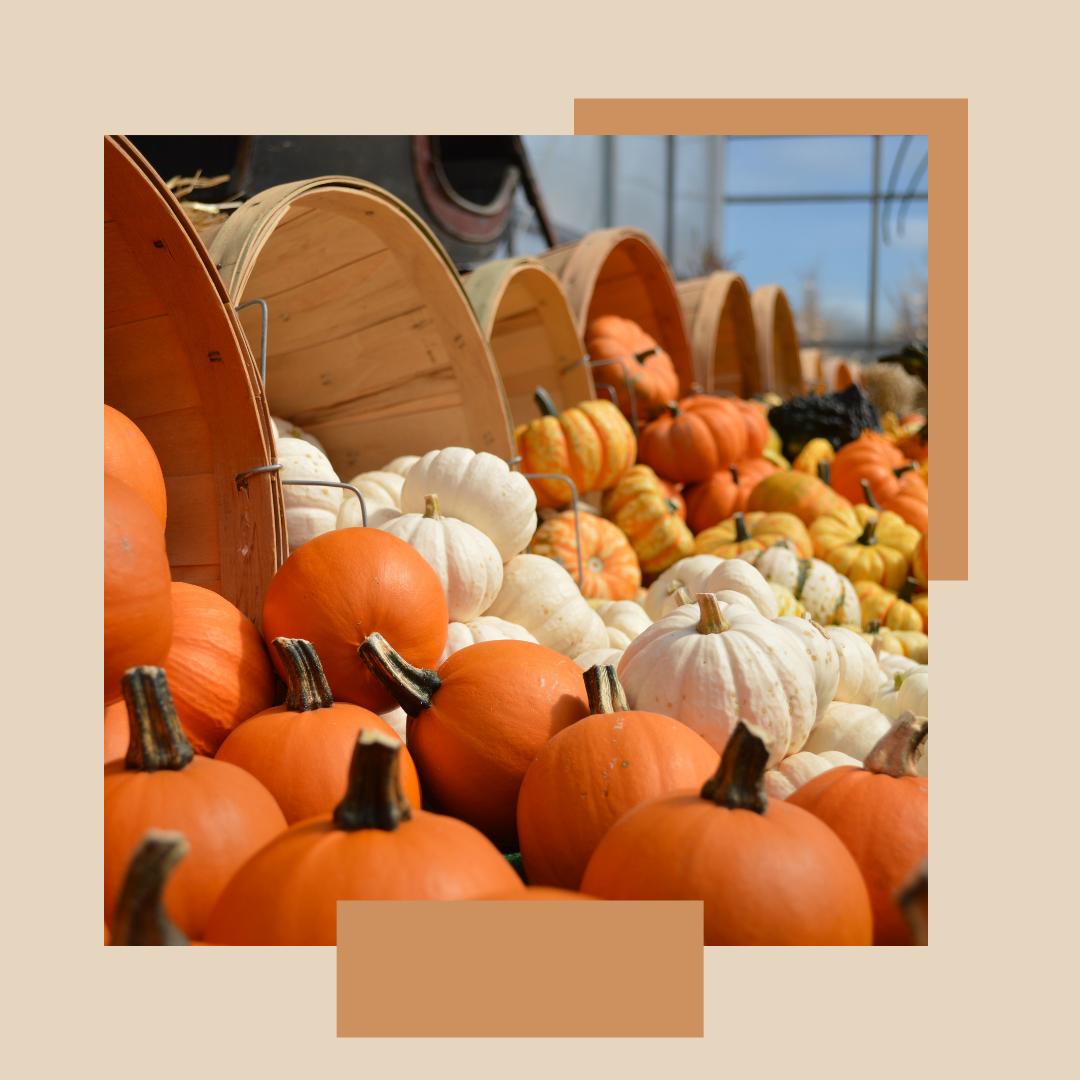The Pumpkin: Part 1 of Fall Flavors