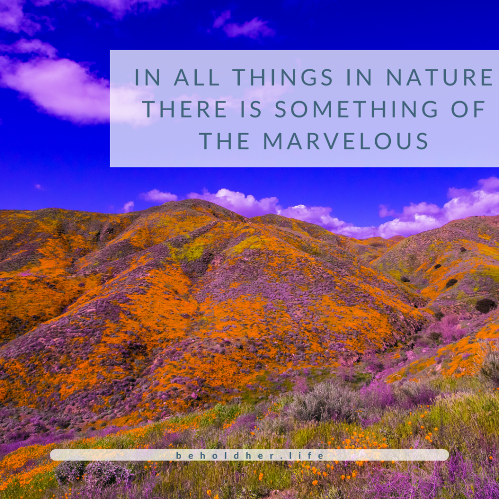 Lanscape Photo with Aristole Quote Overlay. The Quote Reads: In all things in nature there is something of the marvelous. Blog Article - When Seeds Are Planted - The Story of a Beginning