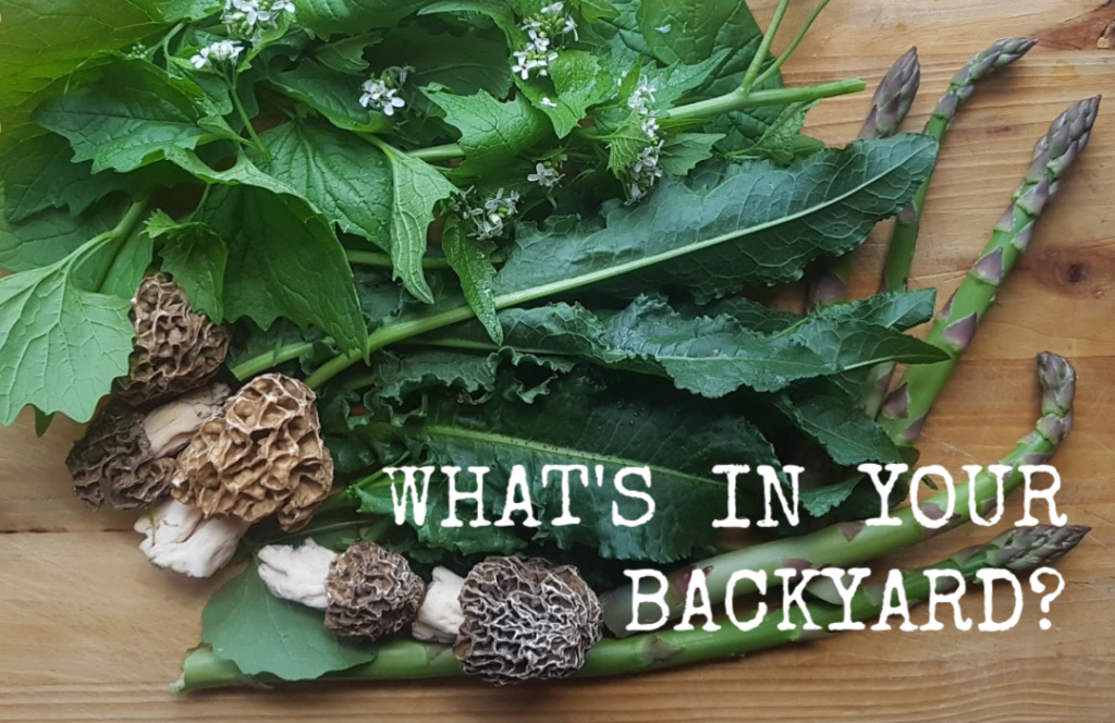 beholdher.life backyard forage wild edibles what's in your backyard
