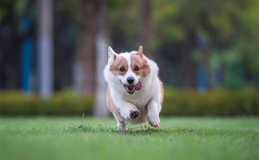 dog running freely on the grass