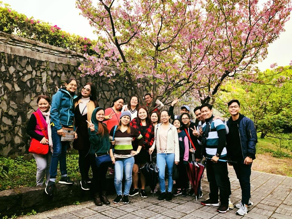Ellcad Team under a Cherry Blossom tree
