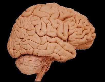 June is Brain Awareness Month