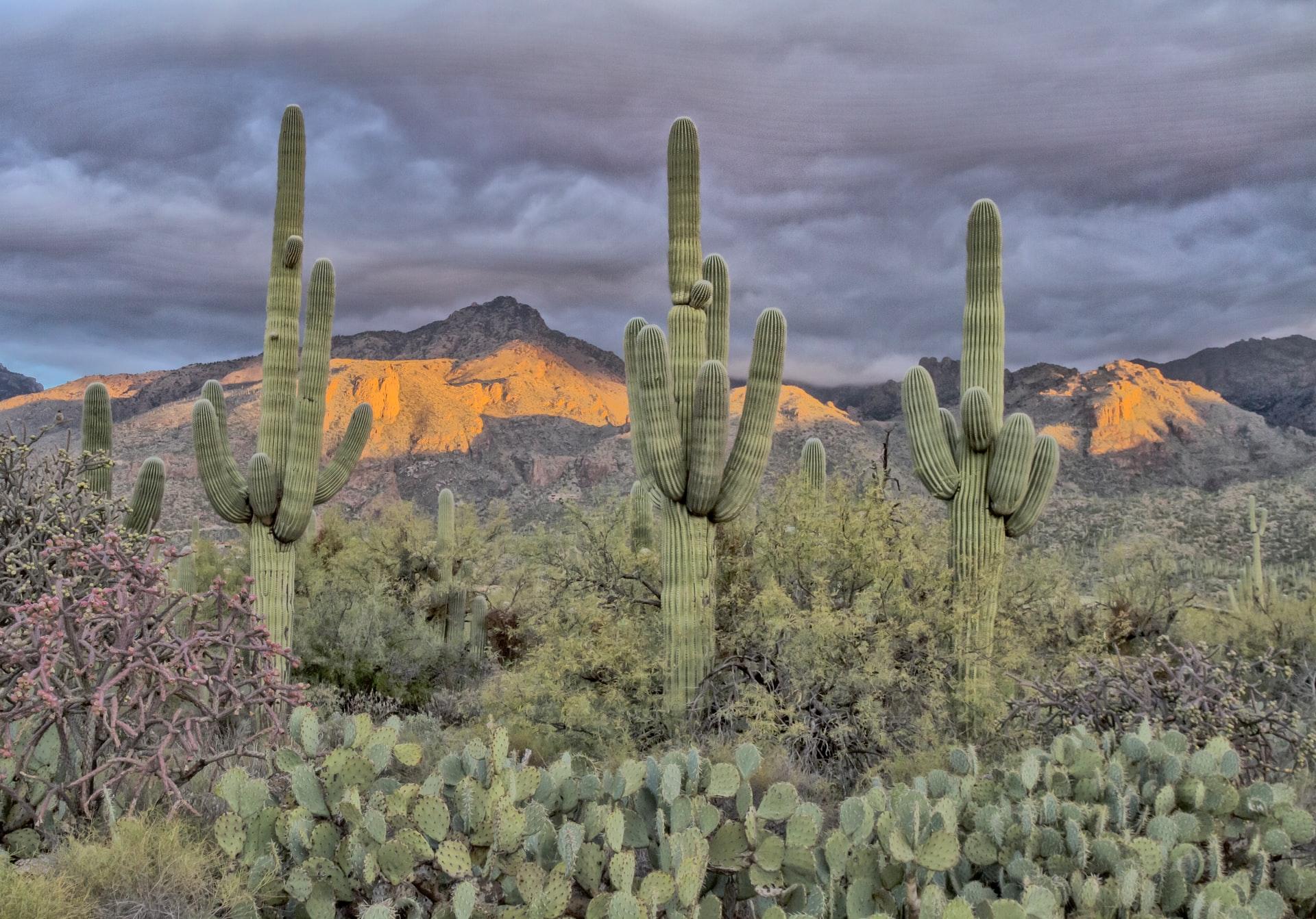 Sabino Canyon, Catalina Foothills, AZ, Saguaro Cactus, examples of felony crimes