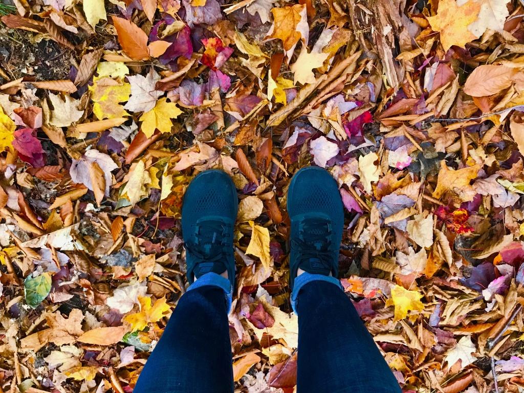 Algonquin Park Autumn Leaves