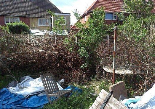 yard-cleanup