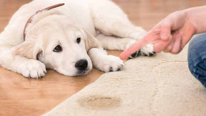 Pet Stain Removal Scottsdale