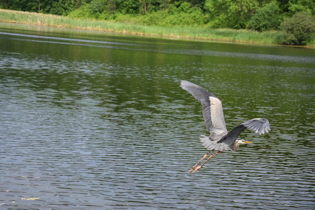 Heron at BP