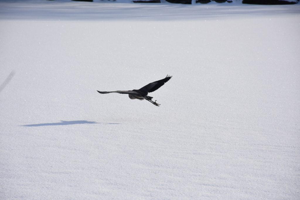 Forgot to fly somewhere warm! (Megan C)