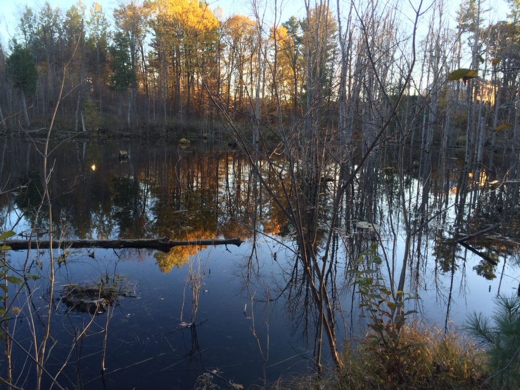 Kizell Pond (Corina)