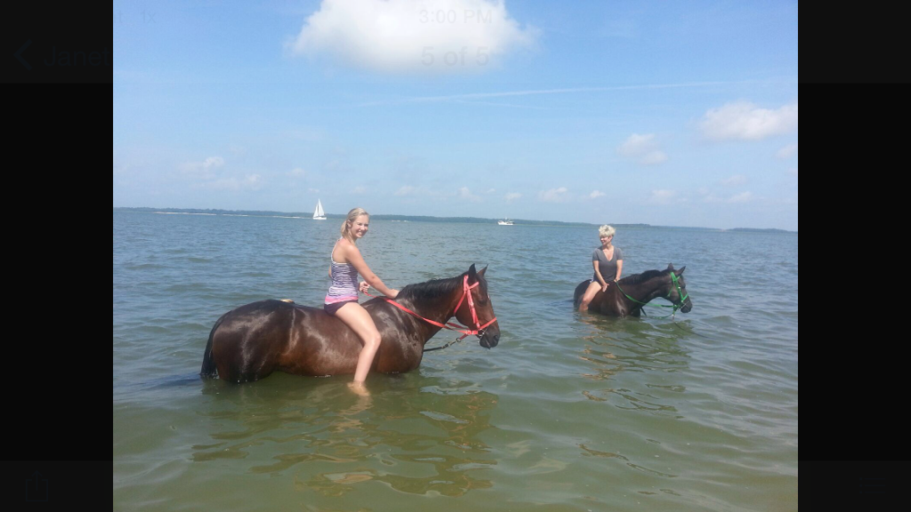 Thankfully, we found friendlier friends--horses that swim!