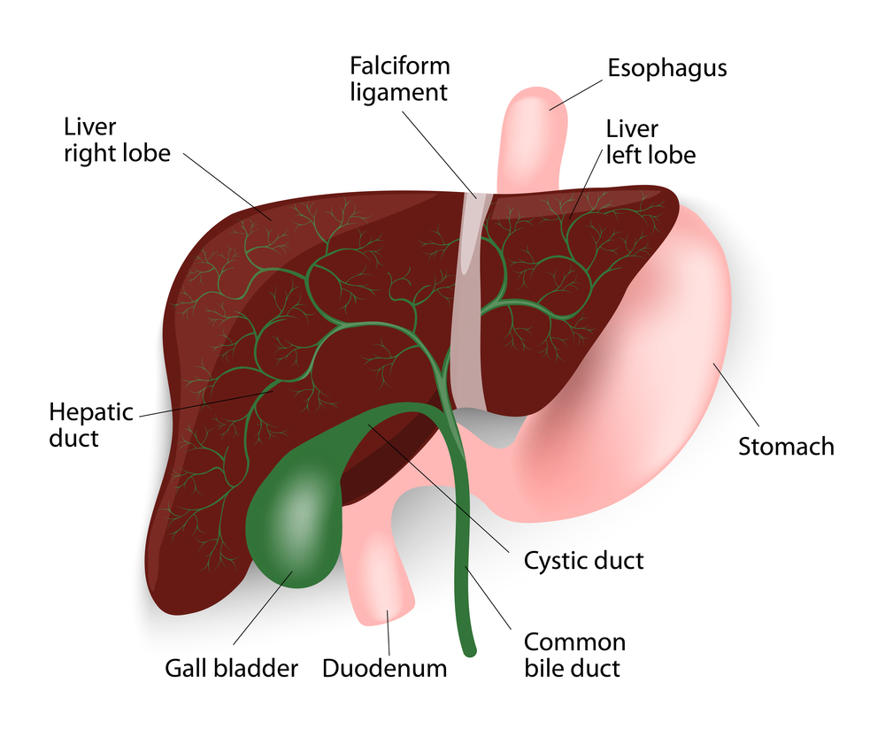 What Should You Expect From Gallbladder Surgery?