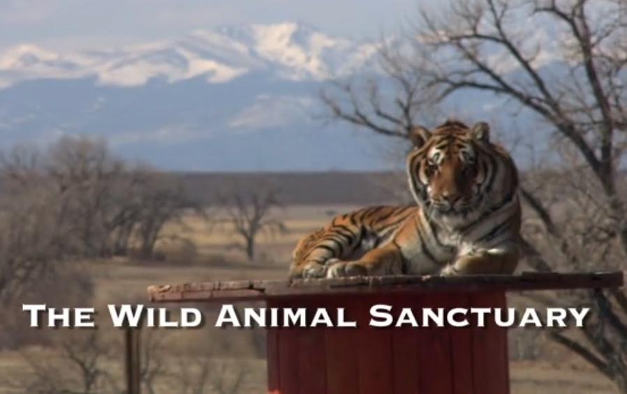 Mile High Jungle Trailer
