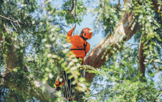 tree service los Angeles