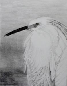 Pencil, Egret shorebird, California Coast