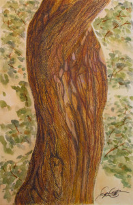Watercolor, colored pencil, tree from Monet's garden, Giverny, France