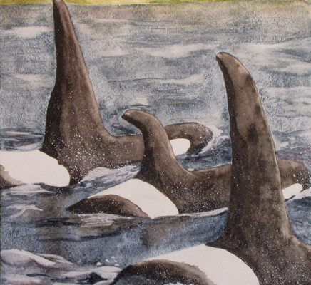 Watercolor painting, orca whale pod, Washington, photo inspiration - Rochelle Severson