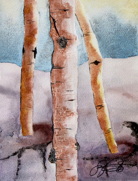 Watercolor and ink, aspen trees