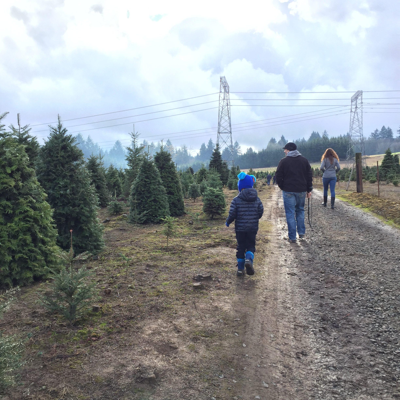 family walking down road to cut Christmas Tree