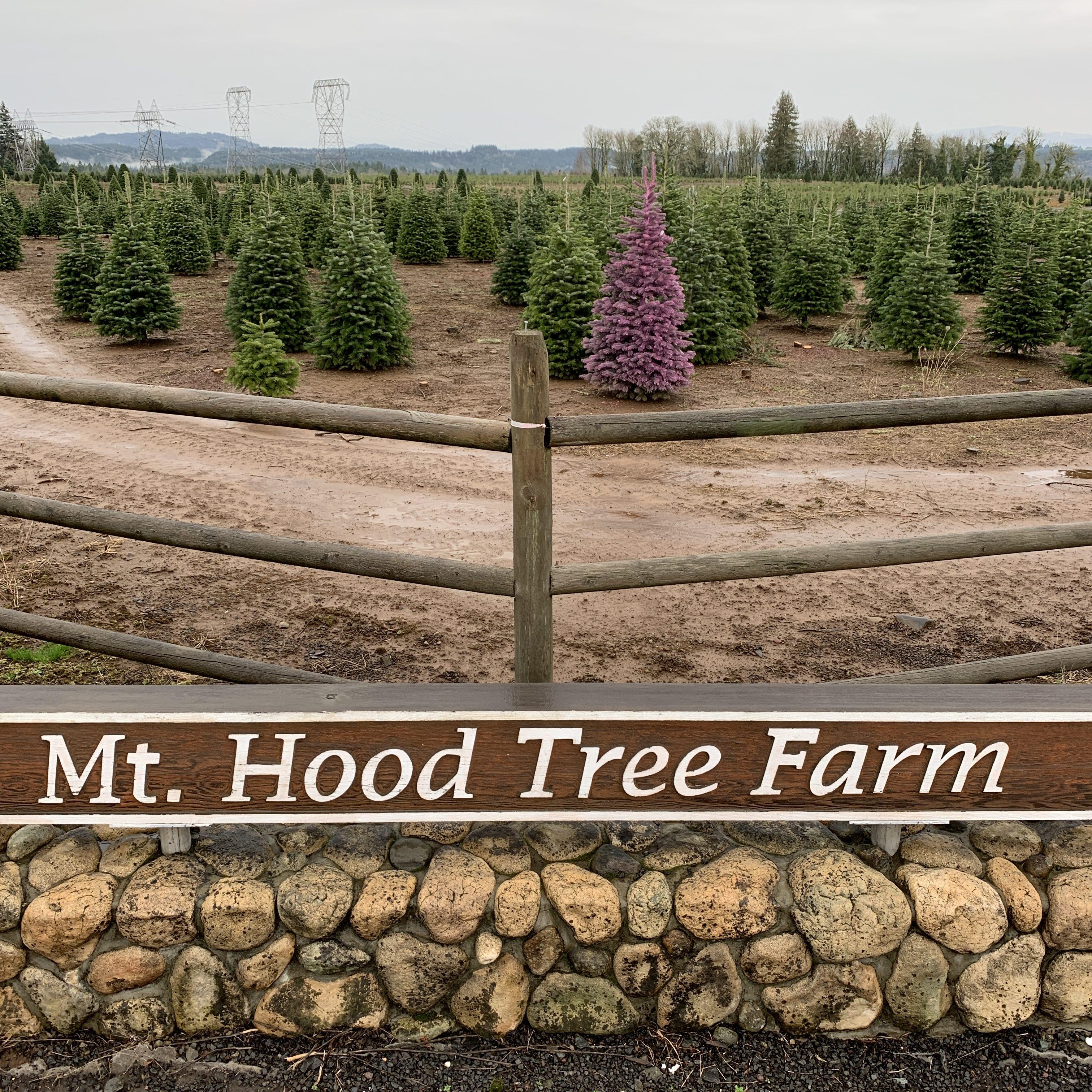 Mt. Hood Tree Farm