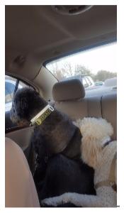Doggie Daycare Olathe KS
