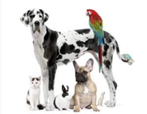Free Discount Pet Medication Card