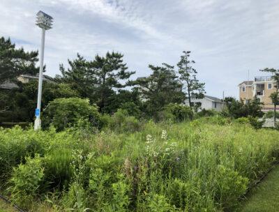 native plant meadow habitat