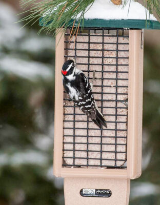 sowney_woodpecker_suet _feeder