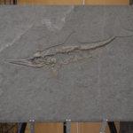 Warfield Fossils