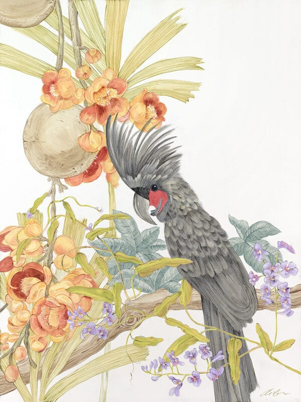 adventures-of-the-palm-cockatoo-black-parrot-by-Allison-Cosmos