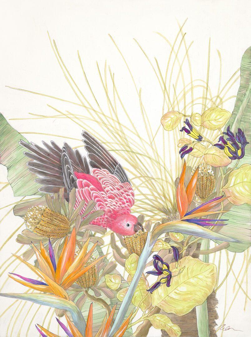 Bird of Paradise Allison Cosmos