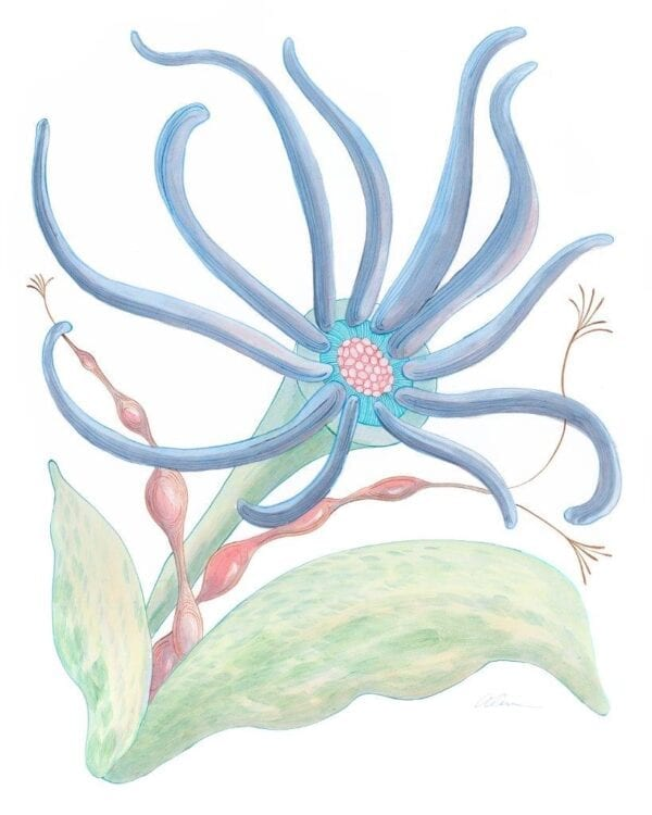 squid-pro-quo-seaweed-art-print-by-allison-cosmos