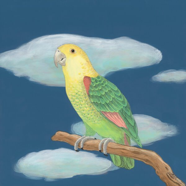 the-feather-forecast-parrot-art-painting-by-allison-cosmos