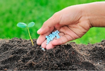 fertilizantes._eleconomista.com_.mx_