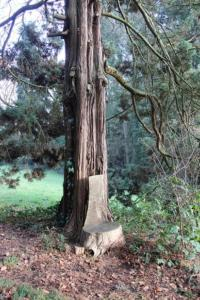 Tree with seat