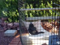 Alice in her hammock