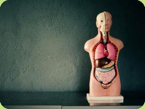 Focus On: Digestive Wellness