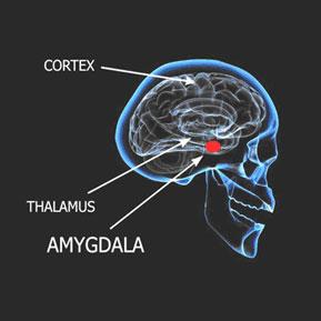Amygdala Retraining™ Program