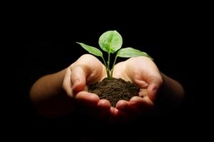 The Heart of Organic Gardening: a Soil Test