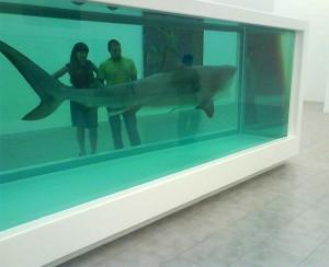 The Aquarium Shark