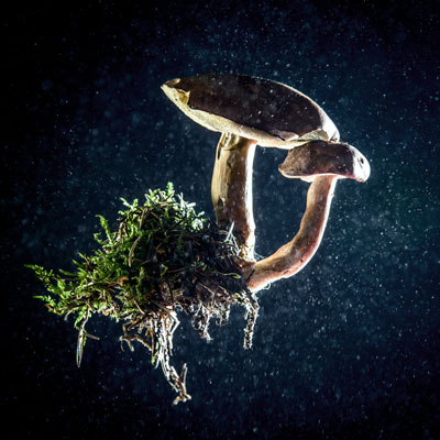 Connective Tissue Disease As Mycelial Metaphor