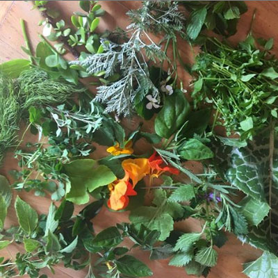 Make Your Own Wild Greens Concentrate