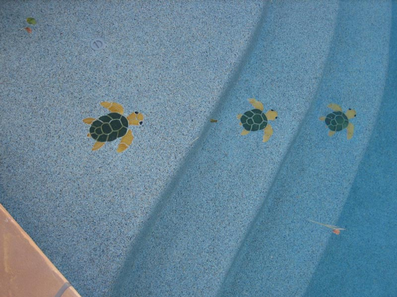 Turtle Decals on Swimming Pool Steps done by our Arizona Pool Company
