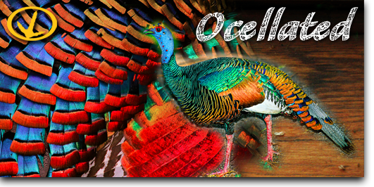 hunt-by-species-ocellated