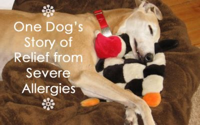 One Dog's Story of Relief from Severe Allergies