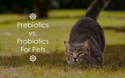 Prebiotics vs. Probiotics For Pets
