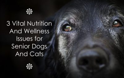 3 Vital Nutrition And Wellness Issues For Senior Dogs And Cats