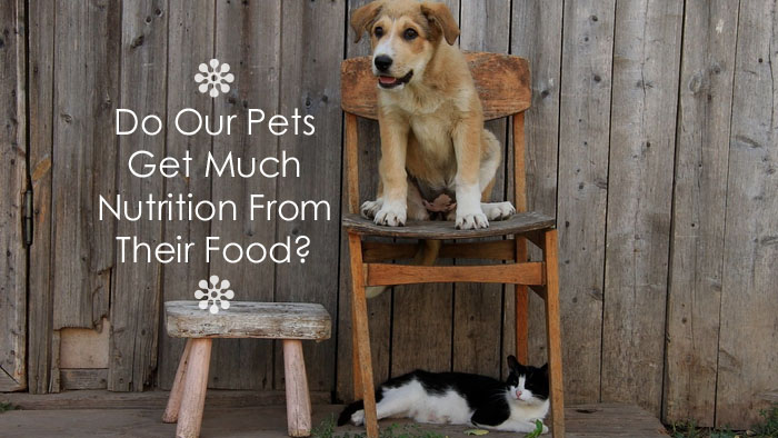 pets-nutrition-from-food