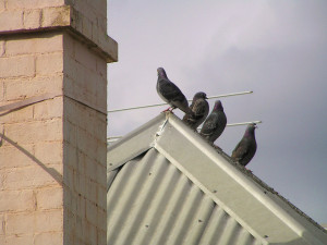 Birds perched along the peak of a roof