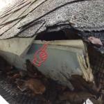 Gray squirrel entry into a roof corner through aluminum