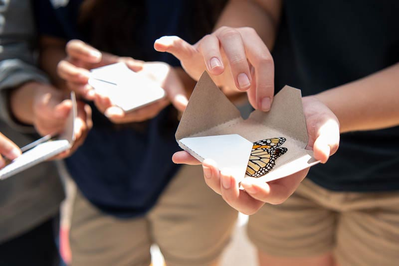 Student opening envelope with butterfly
